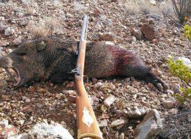 Cum stați cu uciderea animalelor?